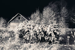 Snow on the branches of trees and bushes. At night Stock Photography