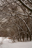 Snow on the branches of trees. Winter forest. Walking in the park in winter. Snow covered trees and ground Royalty Free Stock Photo