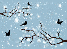 Snow Branches. Vector snow branches with snowflakes and birds Royalty Free Stock Photo