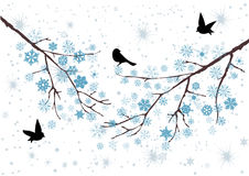 Snow Branches. Vector snow branches with snowflakes and birds Stock Image