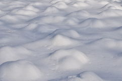 Snow bumps. Roses plants covered by snow forming cute bumps stock photography