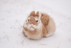 Snow bunny. Fake bunny sitting in the snow with grass peeking out Royalty Free Stock Photos