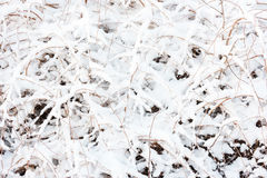 Snow on bush Royalty Free Stock Photography
