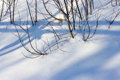 Snow bushes Royalty Free Stock Image