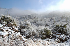 Snow on cactus stock photos