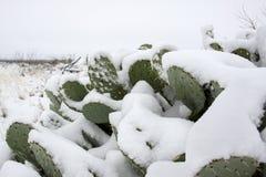 Snow on a Cactus Stock Photos