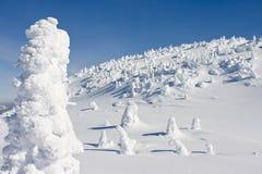 Snow Caked Trees. High on a mountain under a clear blue sky Stock Photos