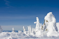 Snow Caked Trees. High on a mountain under a clear blue sky Stock Photography