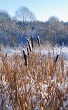 Snow on a cane royalty free stock photos