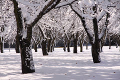 Snow Canopy Royalty Free Stock Photography