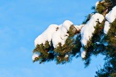 Snow cap on a branch Royalty Free Stock Photos