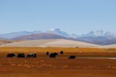 Snow-capped berg, yarks en plateau Stock Afbeelding