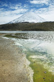 Snow capped high mountains reflected in Lake Chungara Royalty Free Stock Photos