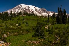 A snow capped mountain, Mount Rainier, at spring time with a lush green meadow sprinkled with wild lowers in the. Foreground and hikers walking one of the stock photo