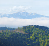 Snow capped mountain peak in the back ground of forest Royalty Free Stock Image