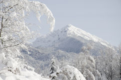 Snow capped mountain peak with trees in foreground. A view at Begunjscica mountain peak from Hom. In the foreground, snow covered trees and branches Royalty Free Stock Photos