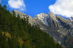 Snow-capped mountain and pines. Multi-colored forest and snow-capped mountains in autumn in Jiuzhaigou Stock Image