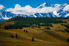 Snow capped mountains. And hills with pine trees in Altai Republic, Russia stock photography