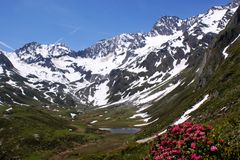Snow-capped mountains, a lake and alpine roses. On the end of the valley and before the Oetztal Alps in South Tyrol is a small mountain lake, snow-capped Stock Photos