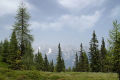 Snow-capped mountains, a meadow Stock Photos