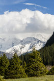 Snow-capped mountains. And the pines Stock Photo