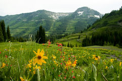 Snow capped mountains a a valley of wildflowers. Royalty Free Stock Image