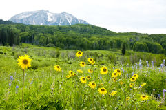 Snow capped mountains and wildflowers Stock Photos