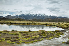 Snow capped Parinacota volcano Stock Photography