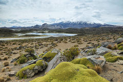 Snow capped Parinacota volcano. And Cotacotani lagoons, Lauca national park, northern Chile. The altitude of this volcano is 6348m above the sea Royalty Free Stock Photography