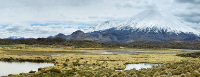 Snow capped Parinacota volcano. And vicunas at its base, Lauca national park, northern Chile. The altitude of this volcano is 6348m above the sea Stock Images