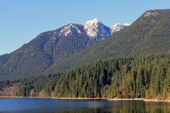 Snow-capped peak and forest. View of snow-capped peak and forest at sea shore Stock Image