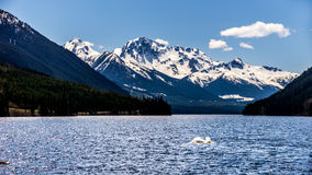 The snow capped peak of Mount Rohr at the south end of Duffey Lake. Duffey Lake is located along Highway 99 in the Coast Mountain Range, between Pemberton and Royalty Free Stock Photography