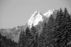 Snow capped peaks and trees Royalty Free Stock Photo