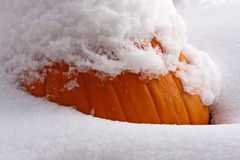 Snow-capped Pumpkin Stock Photo