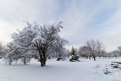 Snow Capped Trees in Iowa. Trees in a park carry the weight of a snow storm in February.  Des Moines, Iowa Stock Photography