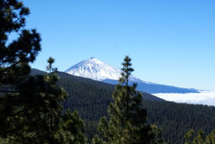 Snow capped volcano with pine forrest Royalty Free Stock Image