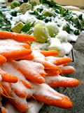 Snow Carrots Royalty Free Stock Images
