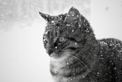 The snow cat Royalty Free Stock Photos