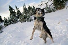 Snow Catcher Royalty Free Stock Photos