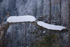 Snow caterpillar. Snow piles caterpillar shape winter Stock Photos