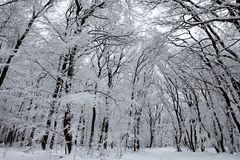 Snow chapel Stock Photography