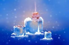 Snow cherry Stock Photos