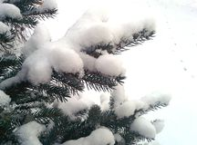 Snow on christmas tree Stock Photos