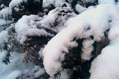 Snow on christmas tree Royalty Free Stock Photography
