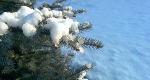 Snow on christmas tree Stock Images