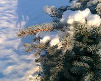 Snow on christmas tree Royalty Free Stock Images