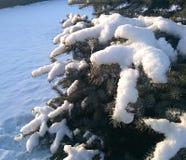 Snow on christmas tree Royalty Free Stock Photography