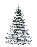 Snow Christmas tree isolated on white background Stock Photography