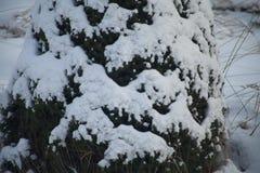 Snow on christmas tree Stock Photo