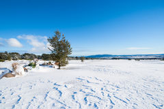 Snow clad landscape on golf course Stock Photos